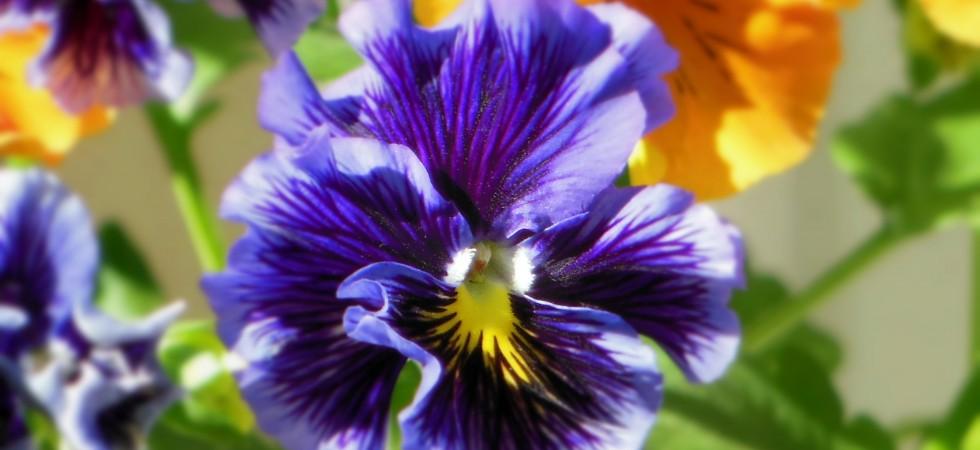 flower1_Fotor-980x450